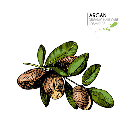 branch isolated: Vector set of hair care ingredients. Organic hand drawn colored elements. Argan nuts branch. Use for cosmetic package, shop, store, products, spa salon, wellne program, procedure, skin, beauty Illustration
