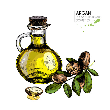 Vector set of hair care ingredients. Organic hand drawn colored elements.Argan nuts branch and oil bottle.cosmetic package, shop, store, products, spa salon, wellness program, procedure, skin, beauty. Illustration
