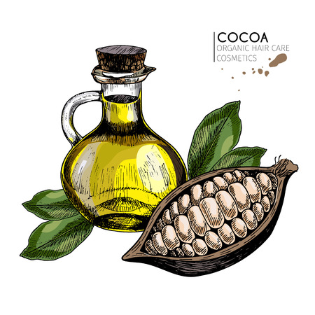 Vector set of hair care ingredients. Organic hand drawn colored elements.Cocoa bean and oil bottle. cosmetic package, shop, store, products, spa salon, wellness program, procedure, skin, beauty Illustration