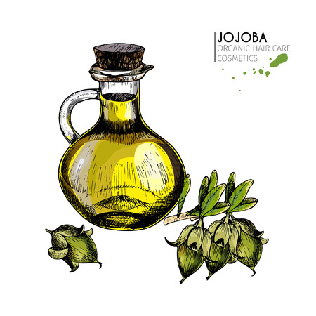 Vector set of hair care ingredients.Organic hand drawn colored elements.Jojoba branch, nut and oil bottle.cosmetic package, shop, store, products, spa salon, wellness program, procedure, skin, beauty