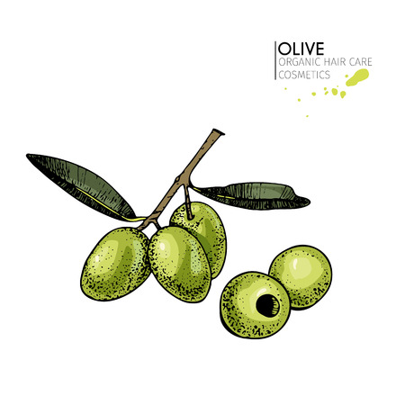Vector set of hair care ingredients. Organic hand drawn colored elements. Olive branch and olives. for cosmetic package, shop, store, products, spa salon, wellness program, procedure, skin, beauty