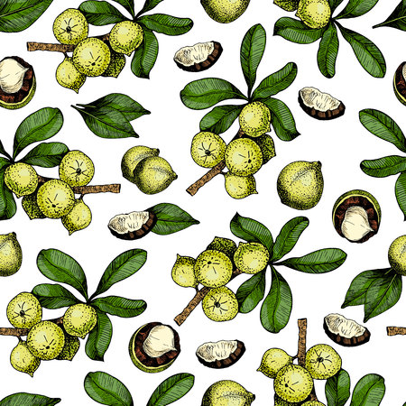 macadamia: Vector seamless pattern of macadamia nuts and branches. Hand drawn colored engraved art. Healthy beauty hair nutrition. design your fashion care products, branding, identity, advertisement, promotion. Illustration