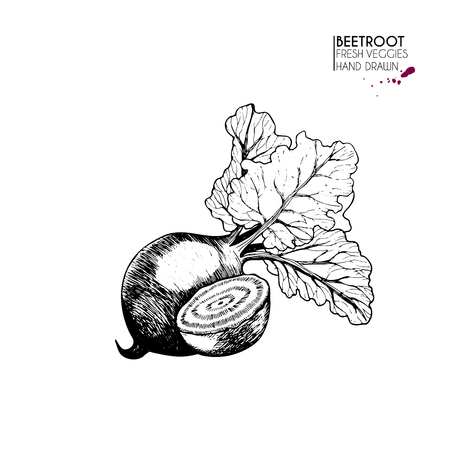 Vector hand drawn set of vegetables. Isolated beetroot. Farm harvest.  Engraved art. Delicious vegetarian objects. Use for restaurant, menu, market, store, party decoration Illustration