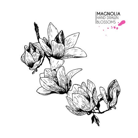 ロゴベクトルの手には、マグノリアの小枝が描画されます。白い背景上に分離。ビンテージの植物のイラストを刻印しました。  イラスト・ベクター素材