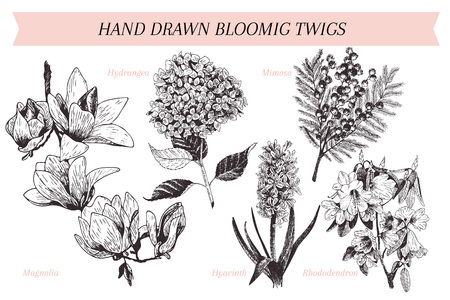 azalea: Vector hand drawn spring blossoms poster. Engraved botanical art. Illustration
