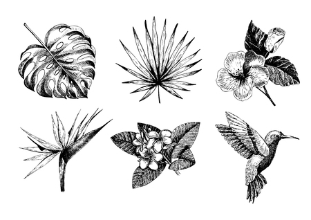 Vecotr hand drawn tropical plant icons. Exotic engraved leaves and flowers. Monstera, livistona palm leaves, bird of paradise, plumeria, hibiscus, hummingbird. Use for exotic beach, wedding, partty