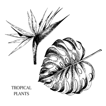 Vecotr hand drawn tropical plant icons. Exotic engraved leaves and flowers. Isoalated on white. Monstera leaf, bird of paradise. Use for exotic beach, wedding, partty Illustration