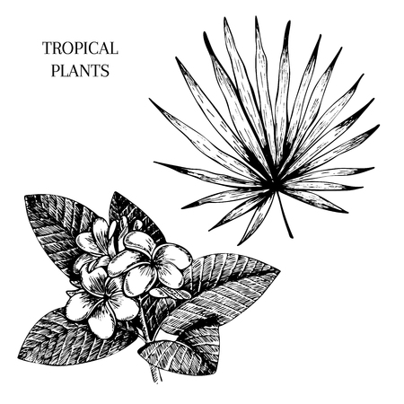 Vecotr hand drawn tropical plant icons. Exotic engraved leaves and flowers. Isoalated on white.  livistona palm leaf, plumeria. Use for exotic beach, wedding, partty