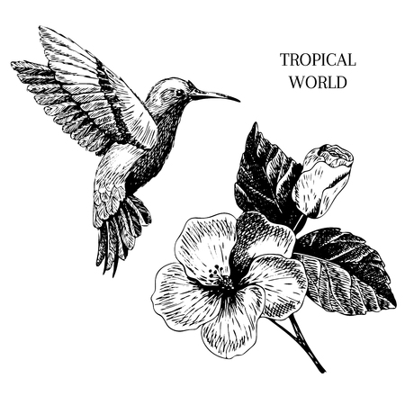 Vecotr hand drawn tropical plant icons. Exotic engraved leaves and flowers. Isoalated on white.  hibiscus, hummingbird. Use for exotic beach, wedding, partty