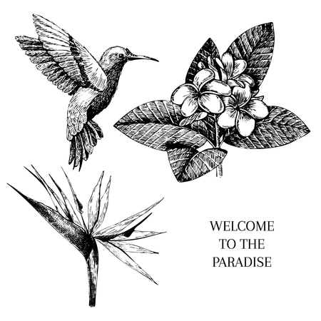 Vecotr hand drawn tropical plant icons. Exotic engraved leaves and flowers. Isoalated on white.   bird of paradise, plumeria, hummingbird. Use for exotic beach, wedding, partty Illustration