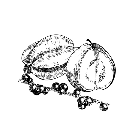 Vector hand drawn exotic fruits. Engraved smoothie bowl ingredients. Tropical sweet food. Illustration