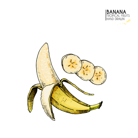 Vector hand drawn set of exotic fruits. Isolated banana. Engraved colored art. Delicicous tropical vegetarian objects. Use for restaurant, menu, smoothie bowl, market, store, party decoration, meal
