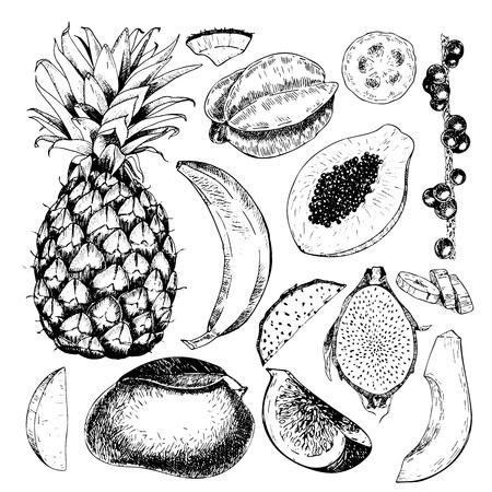 Vector hand drawn exotic fruits. Engraved smoothie bowl ingredients. Tropical sweet food. Pineapple, papaya, fig, mango, banana, acai, pitaya, coconut Use for exotic restaurant food party