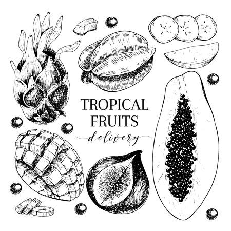 Vector hand drawn exotic fruits. Engraved smoothie bowl ingredients. Tropical sweet food delivery. Pitaya, carambola, papaya, mango, fig, acai. Use for exotic restaurant food party