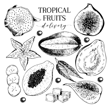 delievery: Vector hand drawn exotic fruits. Engraved smoothie bowl ingredients. Tropical sweet food delivery. Pitaya, carambola, papaya, mango, fig, acai, guava. Use for exotic restaurant food party
