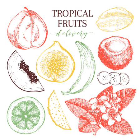 delievery: Vector hand drawn exotic fruits. Engraved smoothie bowl ingredients. Tropical sweet food delivery. Guava, fig, coconut, orange, banana, papaya, pitaya. Use for exotic restaurant food party