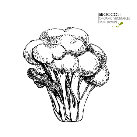 Vector hand drawn set of farm vegetables. Isolated broccoli cabbage. Engraved art. Organic sketched vegetarian objects. Use for restaurant, menu, grocery, market, store, party, meal Illustration