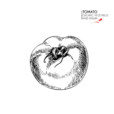 Isolated  whole tomato. Illustration