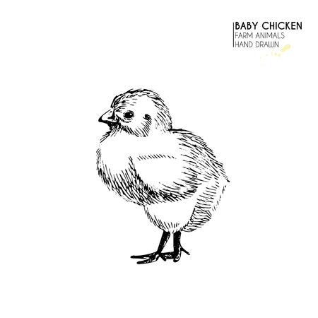 Vector hand drawn set of farm animals. Isolated baby chicken. Engraved art. Organic sketched farming birds. Use for restaurant, menu, grocery, market, store, party, meal Illustration