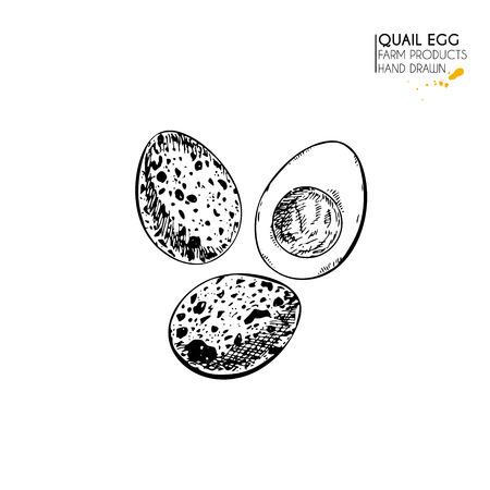 Vektorhand gezeichneter Satz landwirtschaftliche Produkte. Getrenntes gekochtes Ei der Wachtel. Gravierte Kunst. Bio skizzierte Landwirtschaftsmahlzeit. Gebrauch für Restaurant, Frühstücksmenü, Lebensmittelgeschäft, Markt, Geschäft, Party