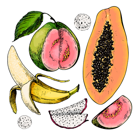 guava fruit: Vector hand drawn set of exotic fruits. Isolated papaya, pitaya, banana, guava. Engraved colored art. Delicious tropical vegetarian objects restaurant, meal, menu, party decoration, smoothie bowls Illustration
