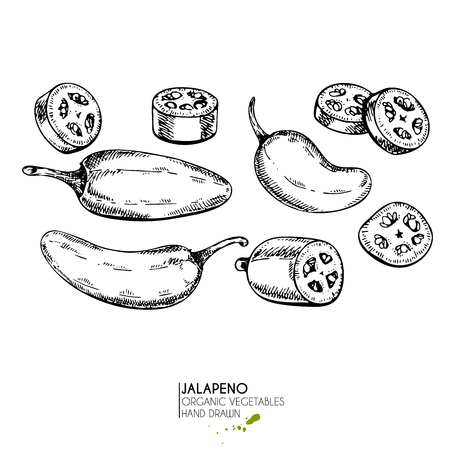 Vector hand drawn set of farm vegetables. Isolated hot chilli jalapeno pepper. Engraved art. Organic sketched vegetarian objects. Use for restaurant, menu, grocery, market, store, party, meal