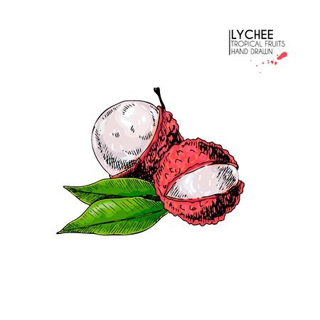 Vektor Handgezeichneten Satz Von Exotischen Früchten. Isolierte ...