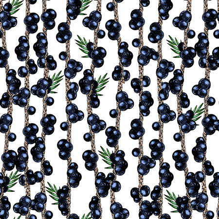 Vector hand drawn seamless pattern of isolated acai branches. Engraved colored art. Delicious tropical vegetarian fruits. for restaurant, meal, market, store, menu, party decoration, smoothie bowls Stock Photo