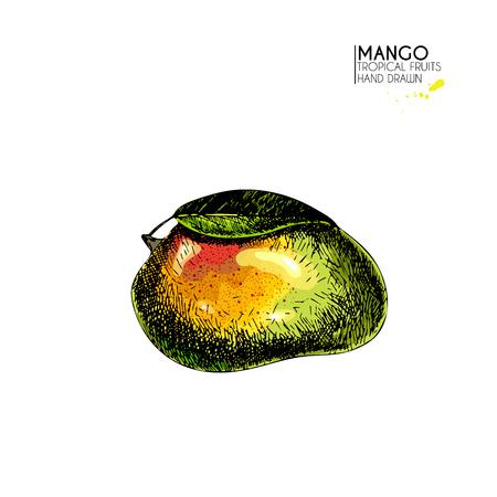 Gezeichneter Satz Des Vektors Hand Exotische Früchte. Ioslated Mango ...