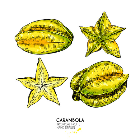 Vector hand drawn set of exotic fruits. Isolated carambola slices, and whole. Engraved colored art. Delicious tropical vegetarian objects. restaurant, menu, smoothie bowl, party decoration, meal