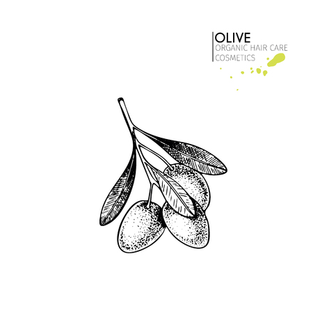 A Vector set of hair care ingredients. Organic hand drawn elements. Farm market vegetables. Olive branch. Use for cosmetic package, shop, store, products,  spa salon, wellnes program, skin.