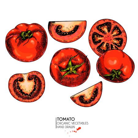 Vector hand drawn set of farm vegetables. Isolated slice, whole and half tomatoes. Engraved colored art. Organic sketched vegetarian objects. restaurant, menu, grocery, market, store, party, meal