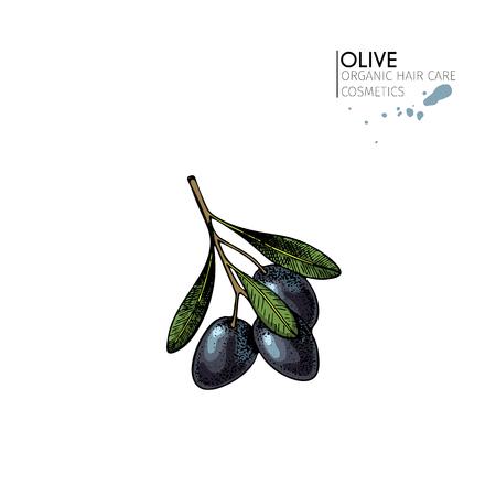 Vector conjunto de ingredientes para el cuidado del cabello. Elementos orgánicos dibujados a mano. Hortalizas del mercado agrícola. Ramo de olivo negro coloreado. para el paquete cosmético, tienda, tienda, productos, salón del balneario, programa de wellnes, piel. Foto de archivo - 82943750