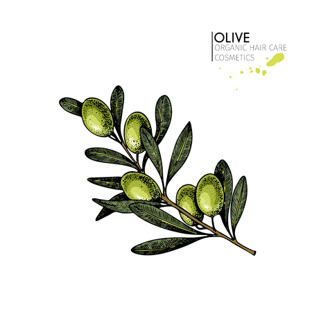 Vector set of hair care ingredients. Organic hand drawn elements. Farm market vegetables. Colored green olive branch. for cosmetic package, shop, store, products, spa salon, wellnes program, skin.
