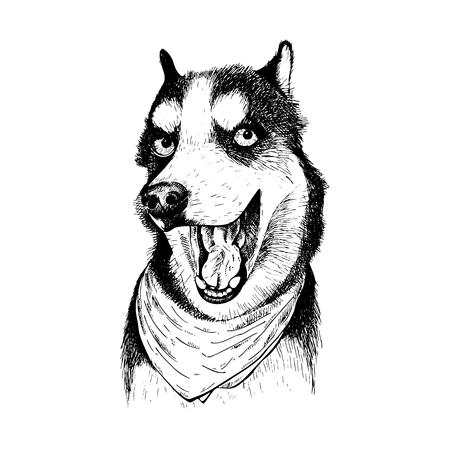 Close-up portrait of Siberian Husky dog wearing the bandana.