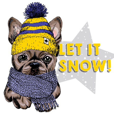 Close up vector portrait of French bulldog dog wearing beanie and scarf. Ski mode mood. Skecthed colored illustraion. Christmas, Xmas, New year. Party decoration, promotion, greeting card.