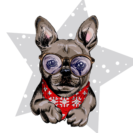 illustraion: Vector portrait of French bulldog dog wearing winter bandana and glasses. Isolated on star and snow. Skecthed color illustraion. Christmas, Xmas, New year. Party decoration, promotion, greeting card. Illustration