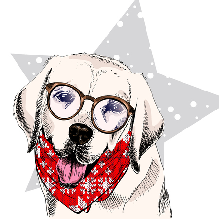 Vector portrait of Labrador retriever dog wearing winter bandana and glasses. Isolated on star, snow. Skecthed color illustraion. Christmas, Xmas, New year. Party decoration, promotion, greeting card.