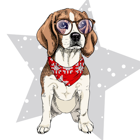 Vector portrait of beagle dog wearing winter bandana and glasses. Isolated on star and snow. Skecthed color illustraion. Christmas, Xmas, New year. Party decoration, promotion, greeting card.
