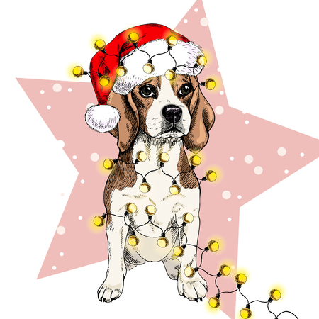 Vector portrait of beagle dog wearing santa hat Christmas lights garland. Isolated on star and snow. Skecthed color illustraion. Christmas, Xmas, New year. Party decoration, promotion, greeting card.