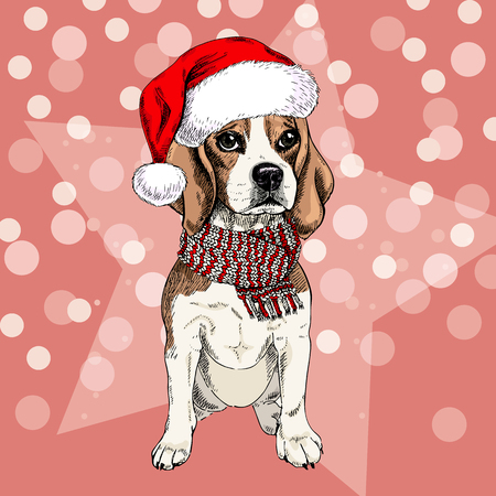 Vector portrait of beagle dog wearing santa hat and scarf. Isolated on star and sparklers bokeh. Skecthed color illustraion. Christmas, Xmas, New year. Party decoration, promotion, greeting card.
