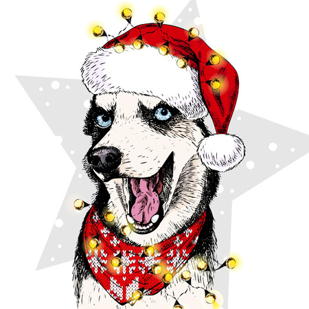 illustraion: Vector portrait of Siberian Husky dog wearing santa hat Christmas lights garland. Isolated on star and snow. Skecthed color illustraion. Christmas, Xmas, New year. Party decoration, greeting card.