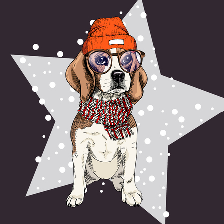 Vector portrait of beagle dog wearing beanie, glasses and scarf. Isolated on star and snow. Skecthed color illustraion. Christmas, Xmas, New year. Party decoration, promotion, greeting card. Illustration
