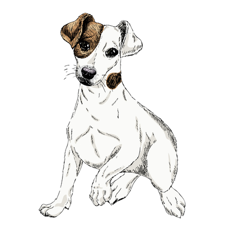 Portrait of Jack russel terrier dog. Vector colored engraved art. Friendly smilling puppy isolated on white background. Pet shelter, flyer, poster, clothing prints. Sketched poster.