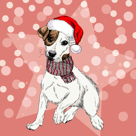 Vector portrait of Jack russel terrier dog wearing santa hat and scarf. Isolated on star and sparkle lights. Sketched color illustration. Christmas, Xmas, New year. Party decoration, greeting card. Illustration