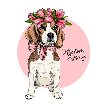 Retrato de perro beagle con corona de tulipán. Bienvenida a la primavera. Dibujado a mano ilustración vectorial de color. Arte detallado grabado. Bueno para la tarjeta de felicitación de Pascua, póster, pancarta, folleto, publicidad. Ilustración de vector