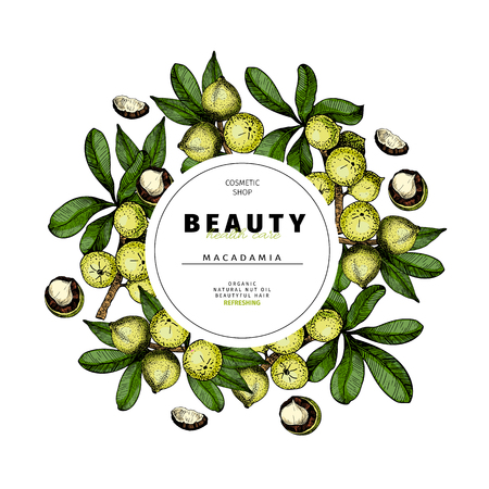 Cosmetic packaging template. Macadamia nut oil beauty product. Vector hand drawn illustration. Organic vegetarian food ingredient. Good for label, beauty shop, spa, welness, restarurant, menu.