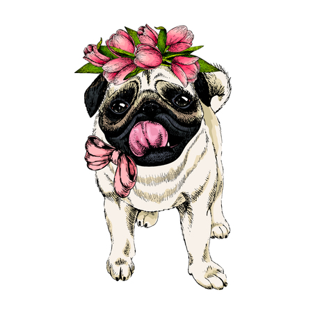 Portrait of pug dog wearing tulip crown. Welcome spring. Hand drawn colored vector illustration. Engraved detailed art. Good for Easter greeting card, poster, banner, flyer, advertisement. Vettoriali