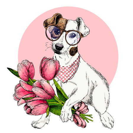 Portrait of jack Russel terrier dog with tulip bouquet. Welcome spring. Hand drawn colored vector illustration. Engraved detailed art. For Easter greeting card, poster, banner, flyer, advertisement.