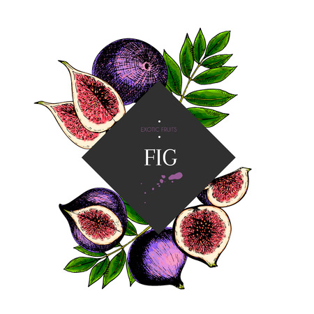 Hand drawn fig whole, sliced, half with leaves in design template. Colored engraved illustration. Square stylish frame composition. Restaurant menu, flyer, banner, poster, exotic fruit summer party.